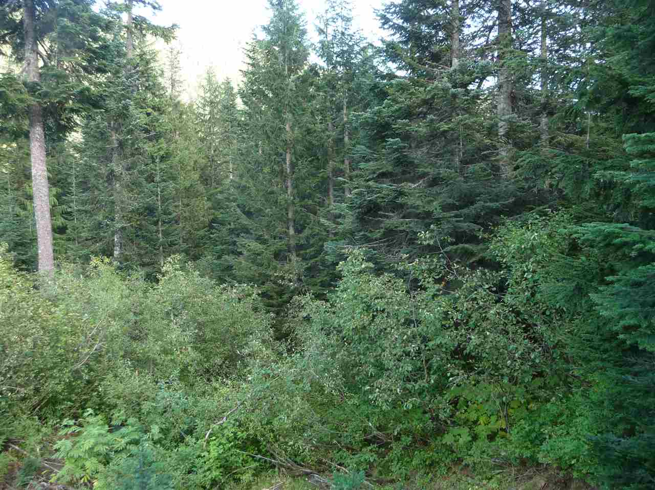For Sale: 20468 Edelweiss Drive, Agassiz, BC Home for $129,900. See 1 photos!