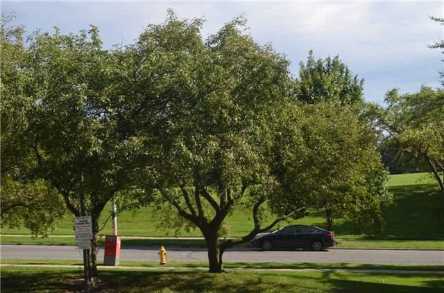 Buliding: 260 Seneca Hill Drive, Toronto, ON