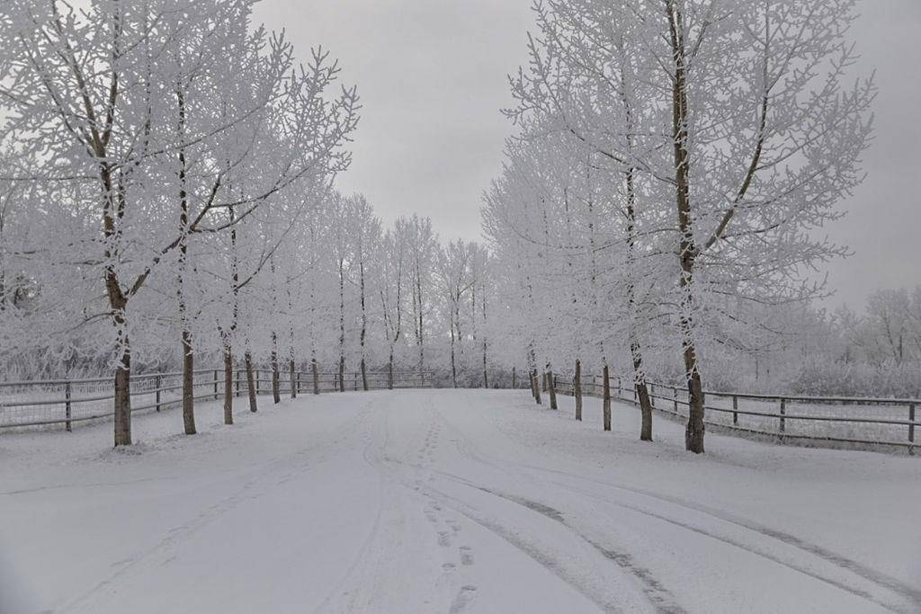 262100 Poplar Hill Drive, Bearspaw_calg, Rural Rocky View County | Image 2