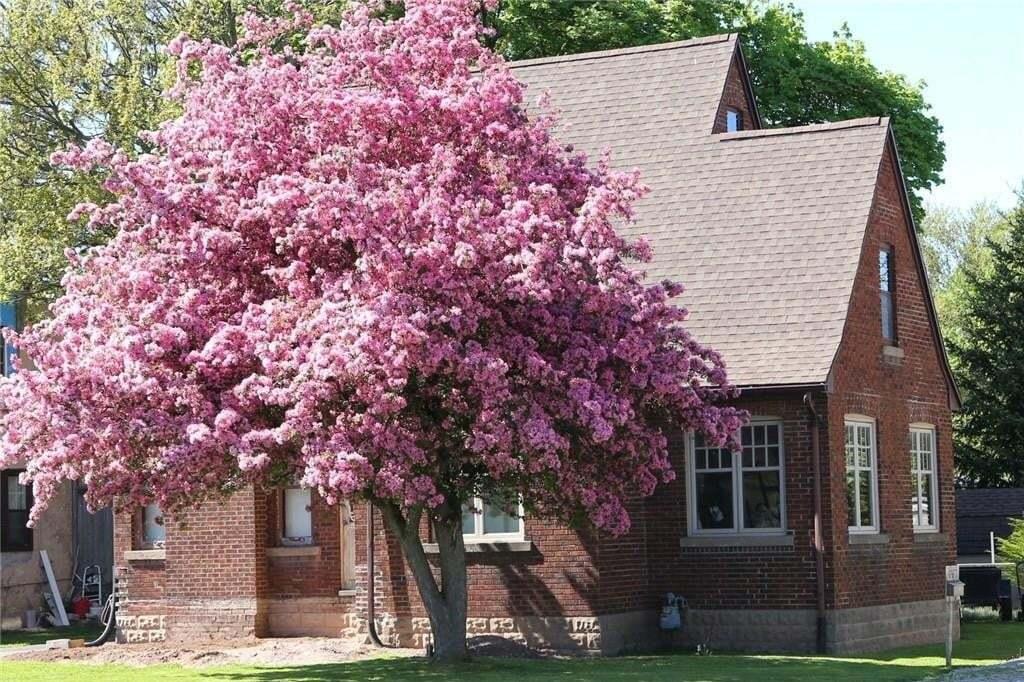 House for sale at 6467 Thorold Stone Rd Niagara Falls Ontario - MLS: 30819191