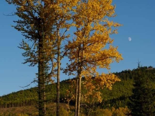 Home for sale at 0 Mccarren Creek Road  Greenwood British Columbia - MLS: 2432507