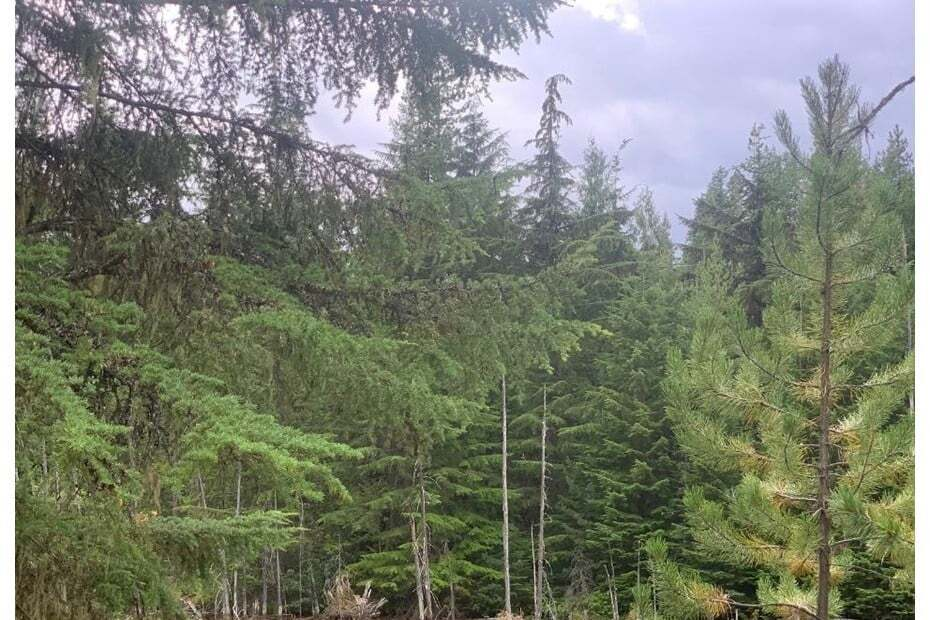 Residential property for sale at 6 Crown Creek Forest Rd Unit LOT Gray Creek British Columbia - MLS: 2454357