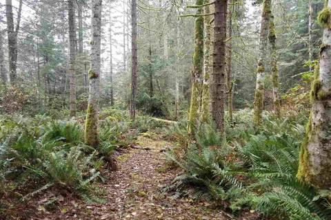 Home for sale at 0 Galiano Wy Galiano Island British Columbia - MLS: R2336784